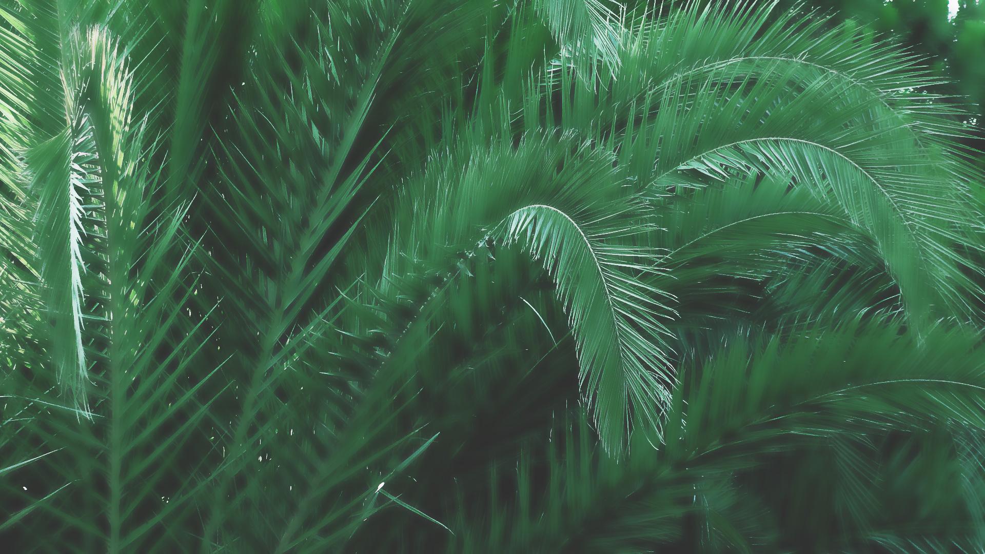 fond superieur palmier entretien