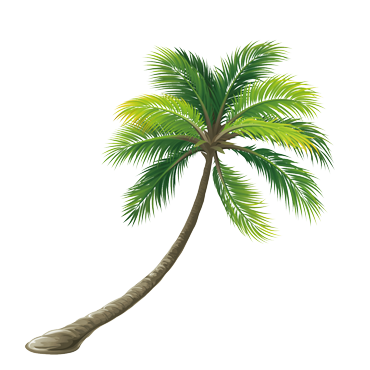 Planet coconut entretien palmier et conseils de culture - Engrais pour palmier ...